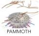 PAMMOTH